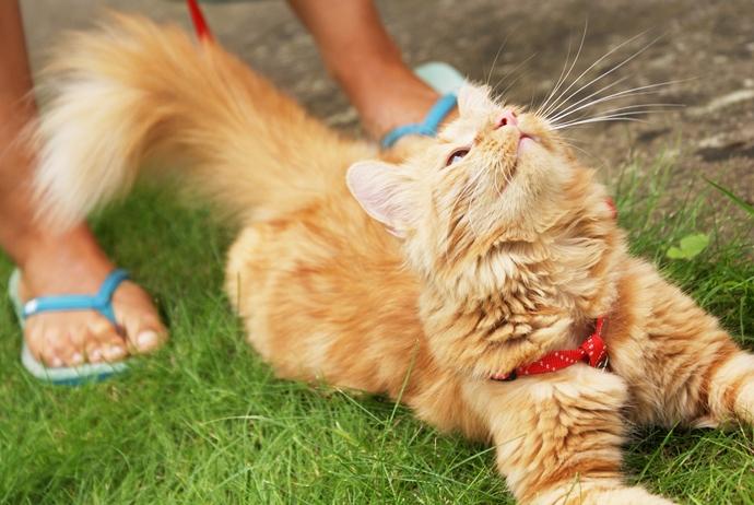 rudy piękny kot kicia