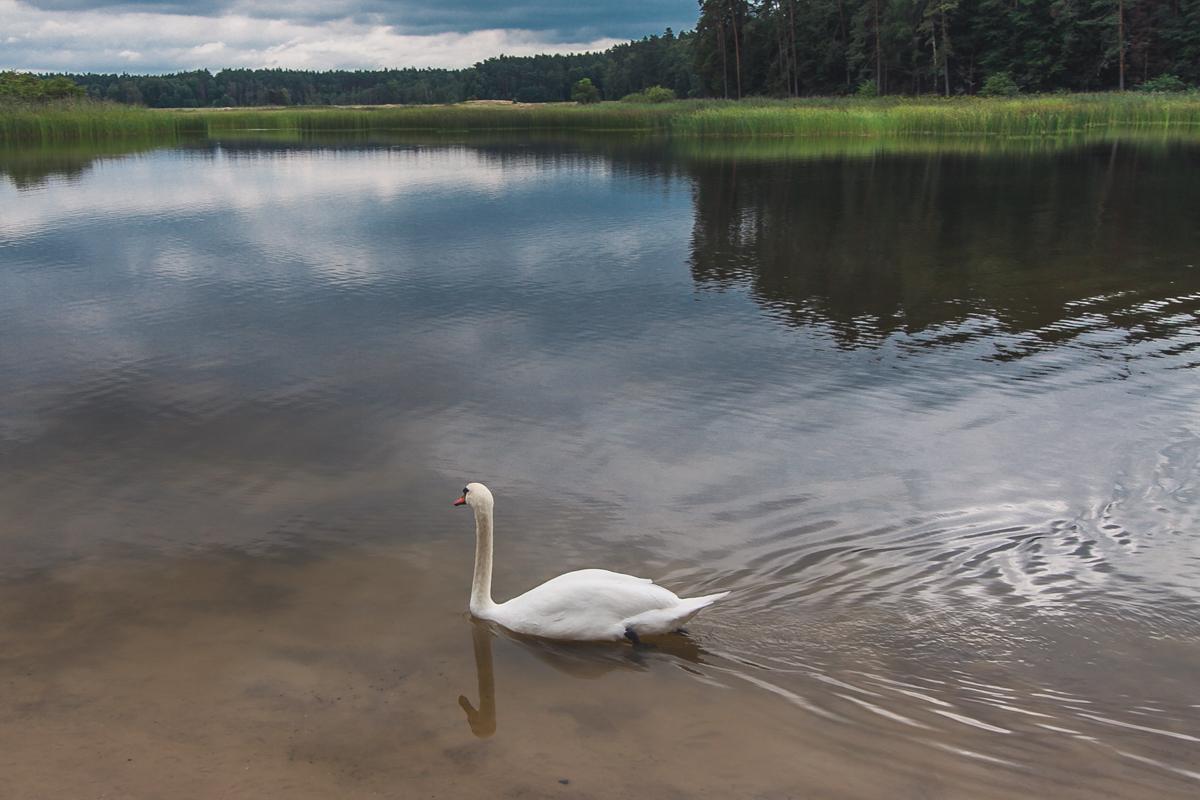 Jezioro w zwierzyńcu z plażą
