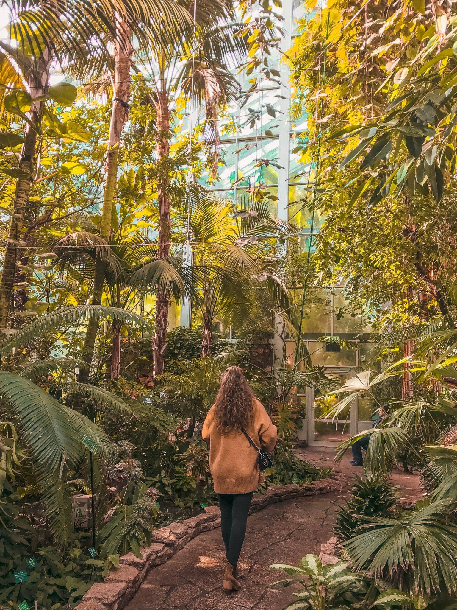 atrakcje-łodz-palmiarnia