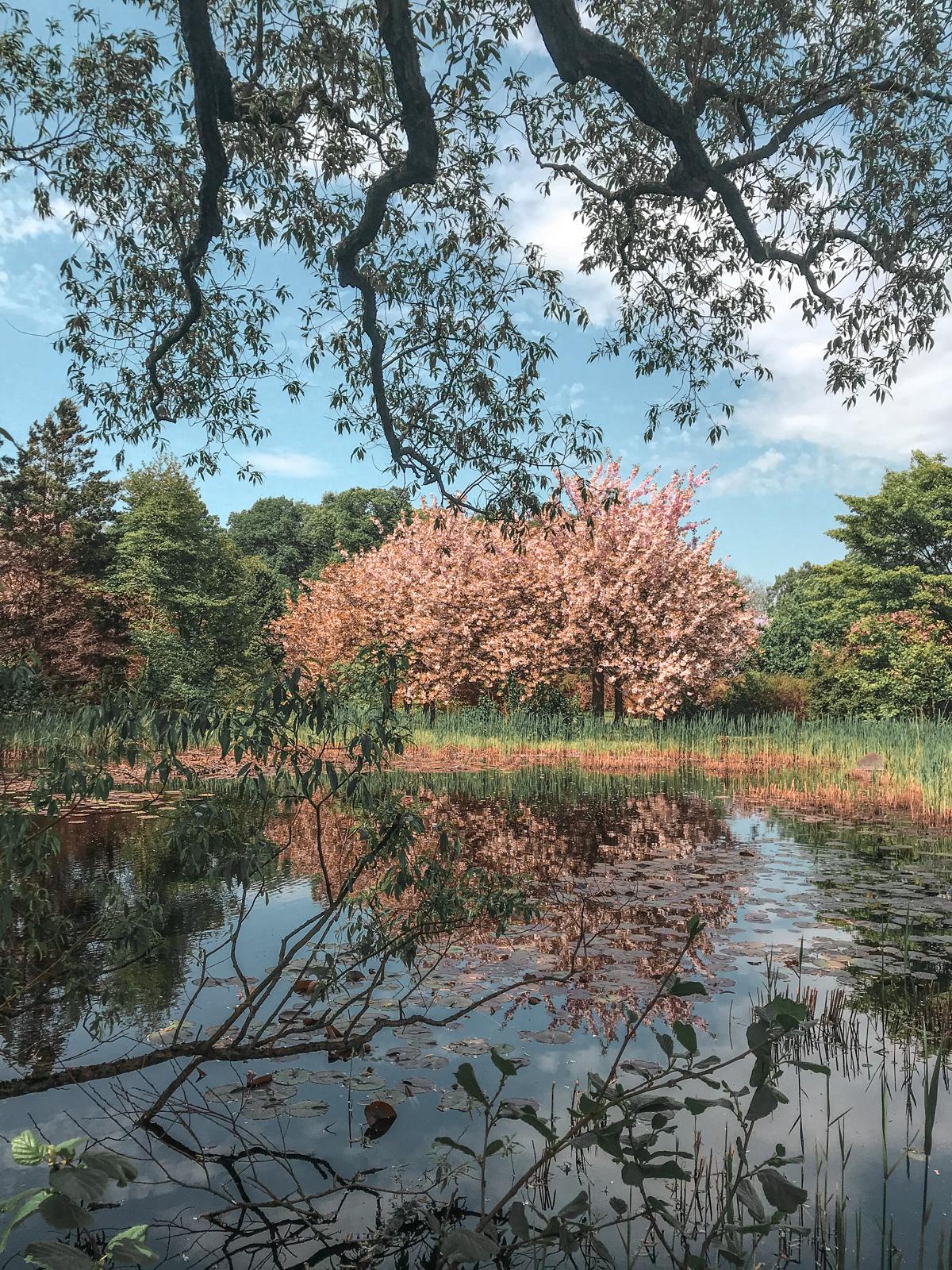 ogród japoński w łodzi ogród botaniczny