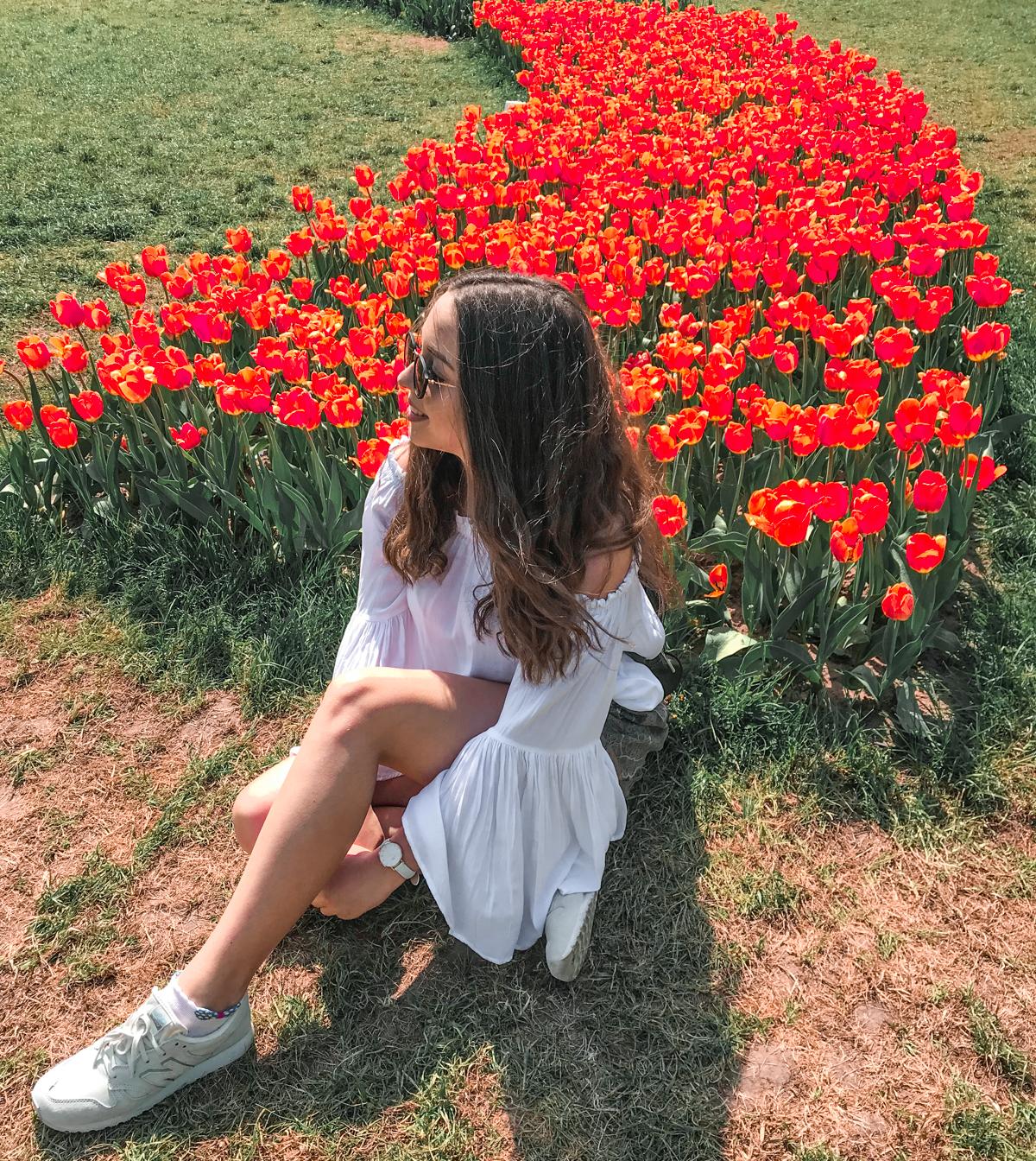 pole tulipanów łódź polska