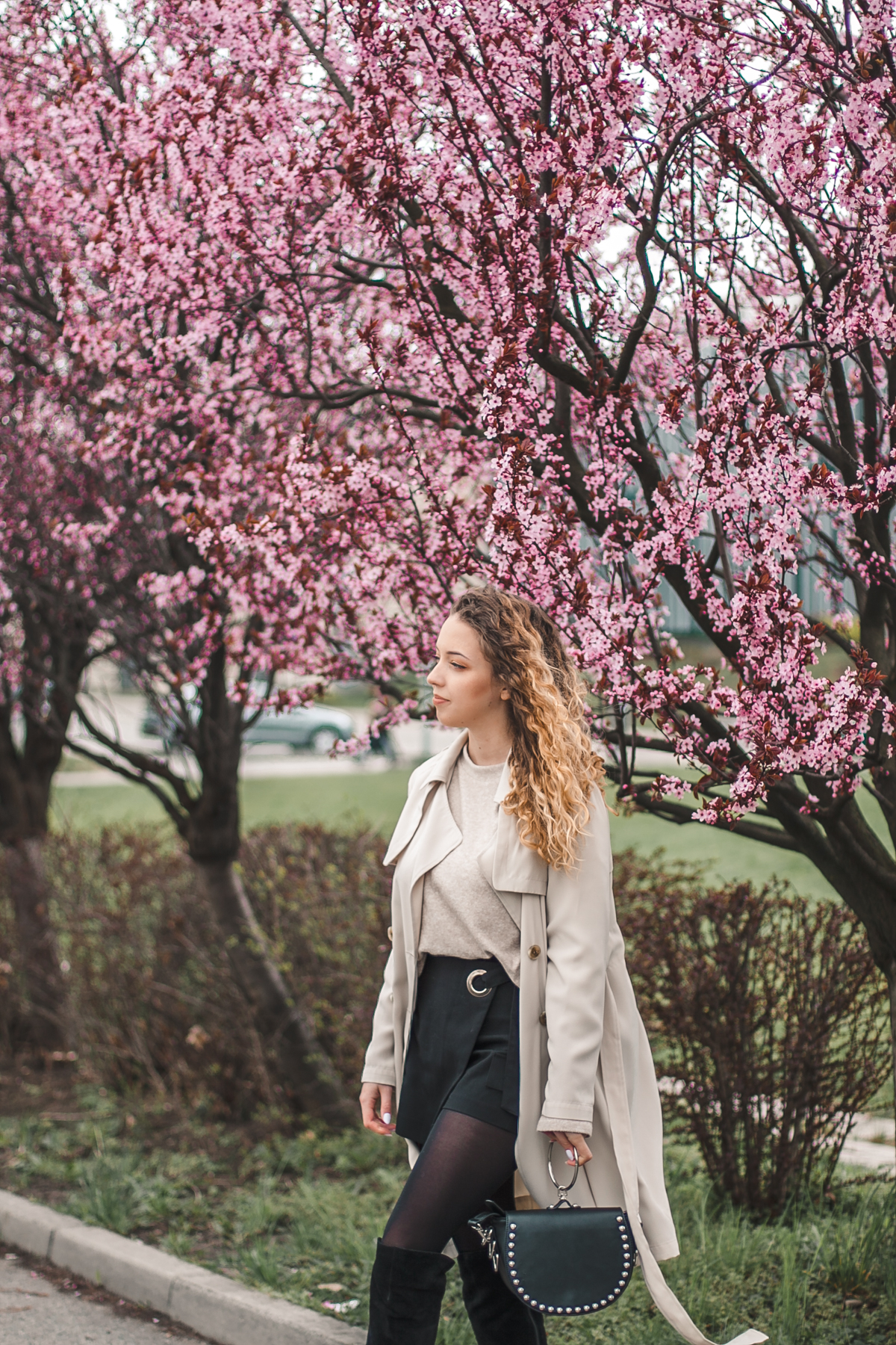 różowe drzewa w rzeszowie
