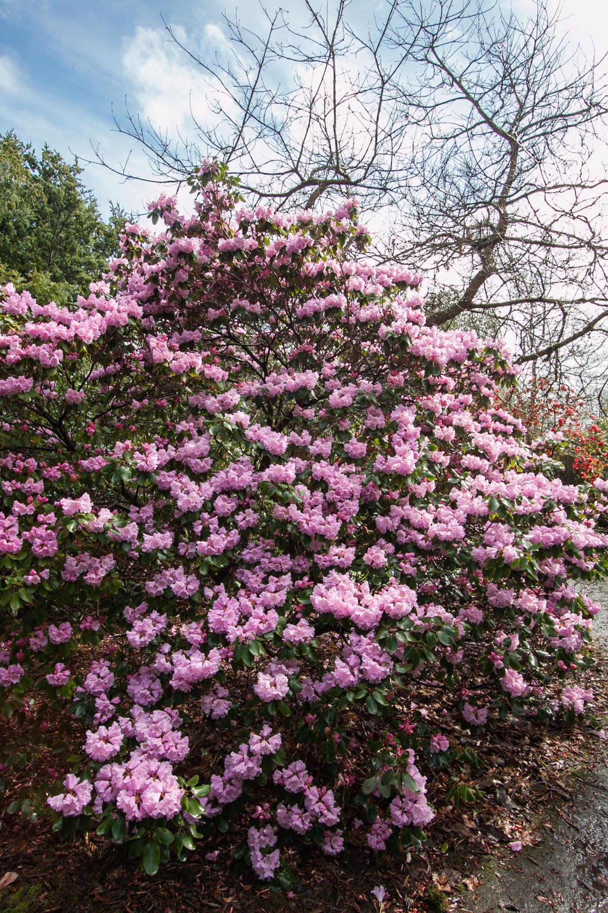 ogród botaniczny w edynburgu atrakcje