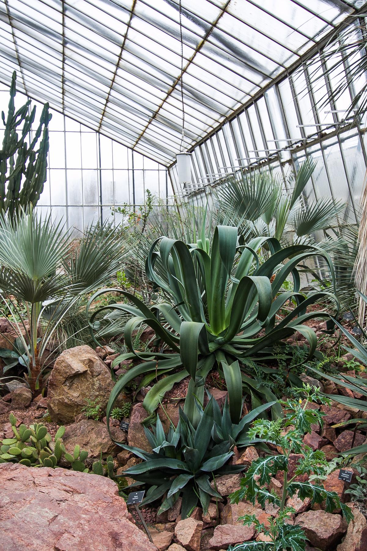 palmiarnia w edynburgu atrakcje