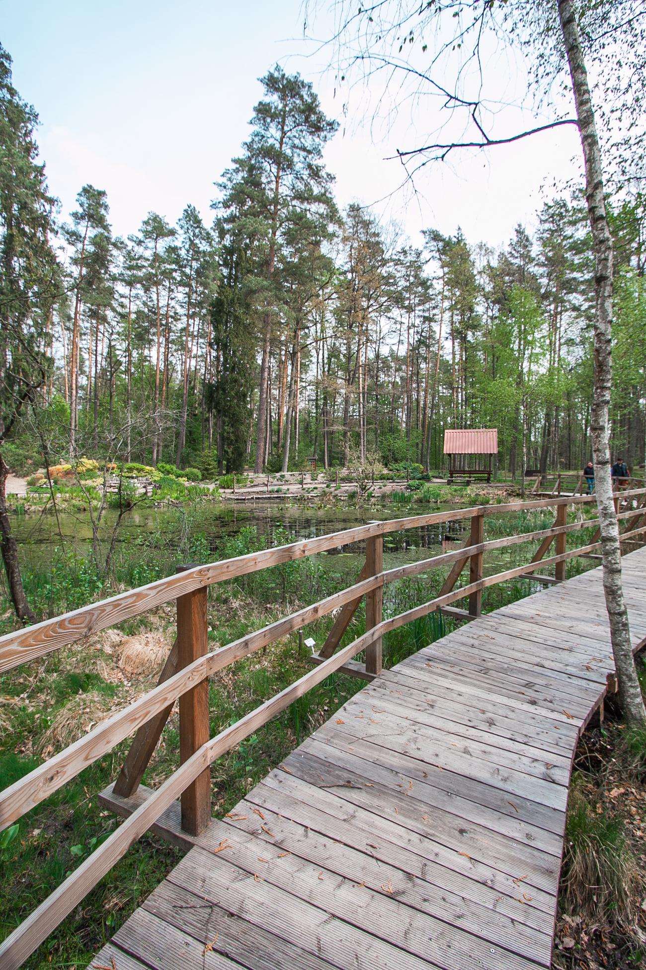 leśne arboretum w kudypach