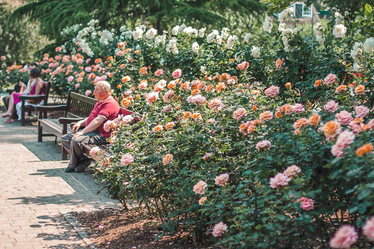holland park najlepsze londyńskie parki