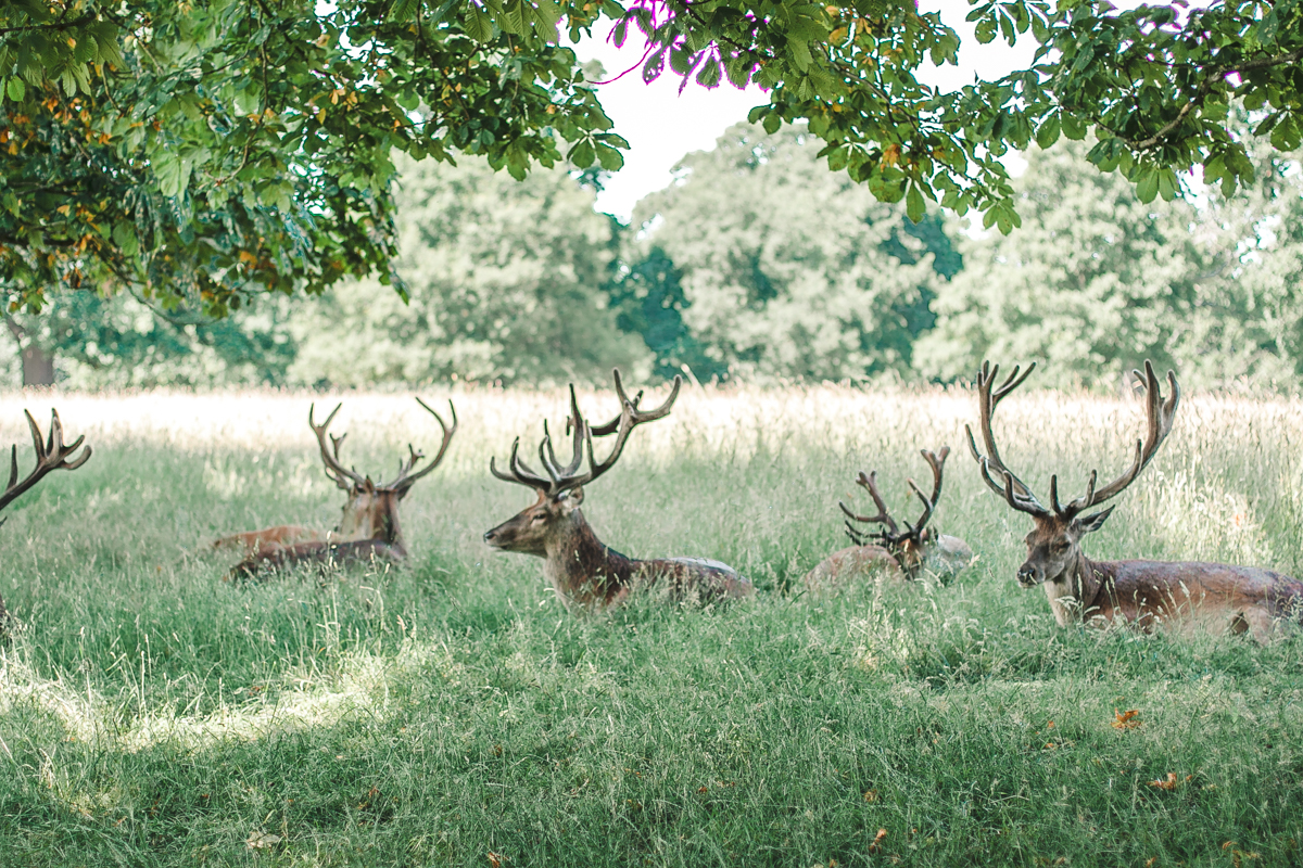 park richmond jelenie