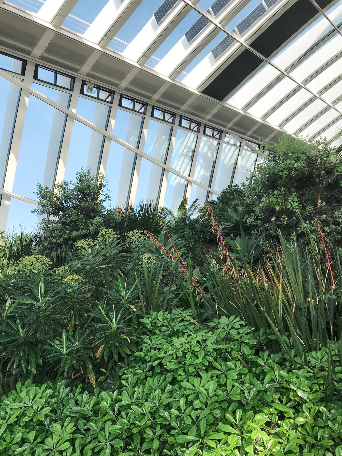 sky garden ogród w londynie