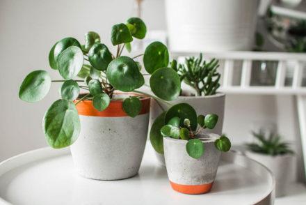 najpiękniejsze doniczki i osłonki na rośliny z aliexpress