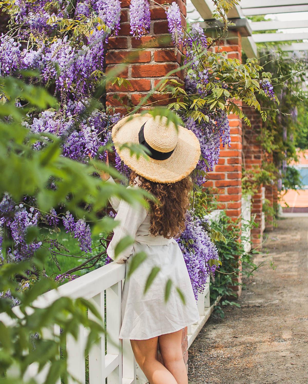 sesja przy wisterii łańcut wiosenne stylizacje